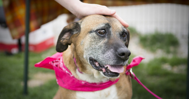 Franklin County Dog Shelter and Adoption Center: Meet potential pets at bimonthly 'Mingle With Our Mutts'