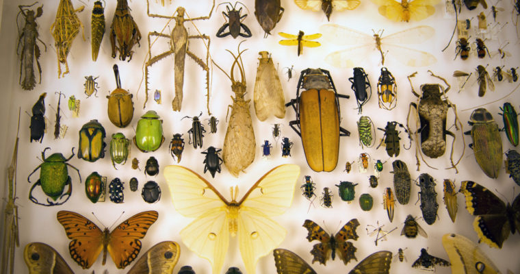 Triplehorn Insect Collection: See millions of six-legged specimens at Ohio State's Museum of Biological Diversity