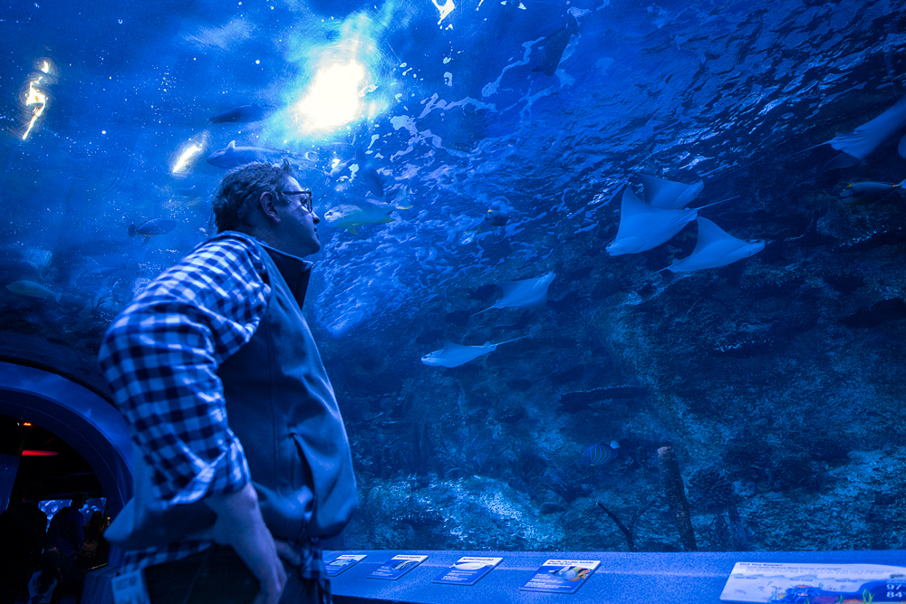 Newport Aquarium: One of the nation's finest fishy exhibits
